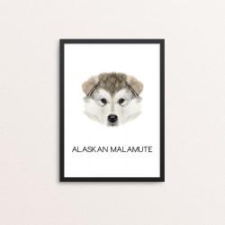 Plakat: Alaskan Malamute