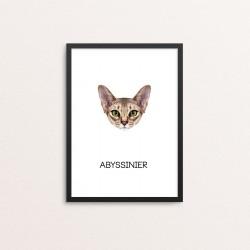 Plakat: Abyssinier