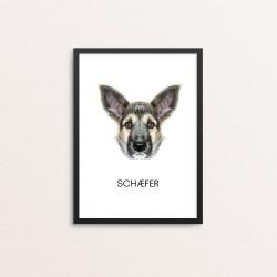 Plakat: Schæfer