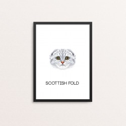 Plakat: Scottish Fold
