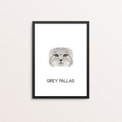 Plakat: Grey Pallas