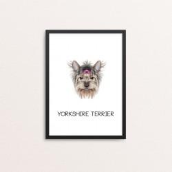 Plakat: Yorkshire Terrier,...