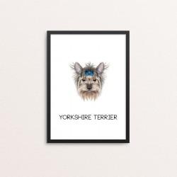 Plakat: Yorkshire Terrier, blå