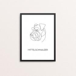 Plakat: 'MITTELSCHNAUZER',...