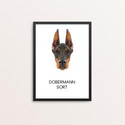 Plakat: Dobermann, sort