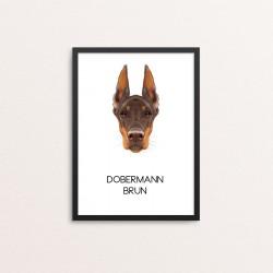 Plakat: Dobermann, brun