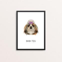 Plakat: Shih Tzu